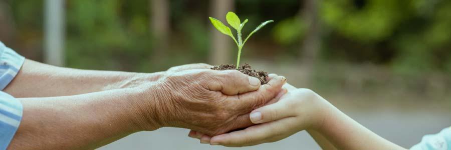 Save for Grandchildren